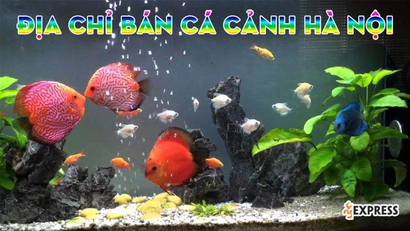 top-10-dia-chi-ban-be-ca-canh-tai-ha-noi-re-dep-35express